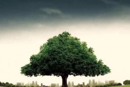 【祥和鑫华新】《大树之恩》 看哭无数人